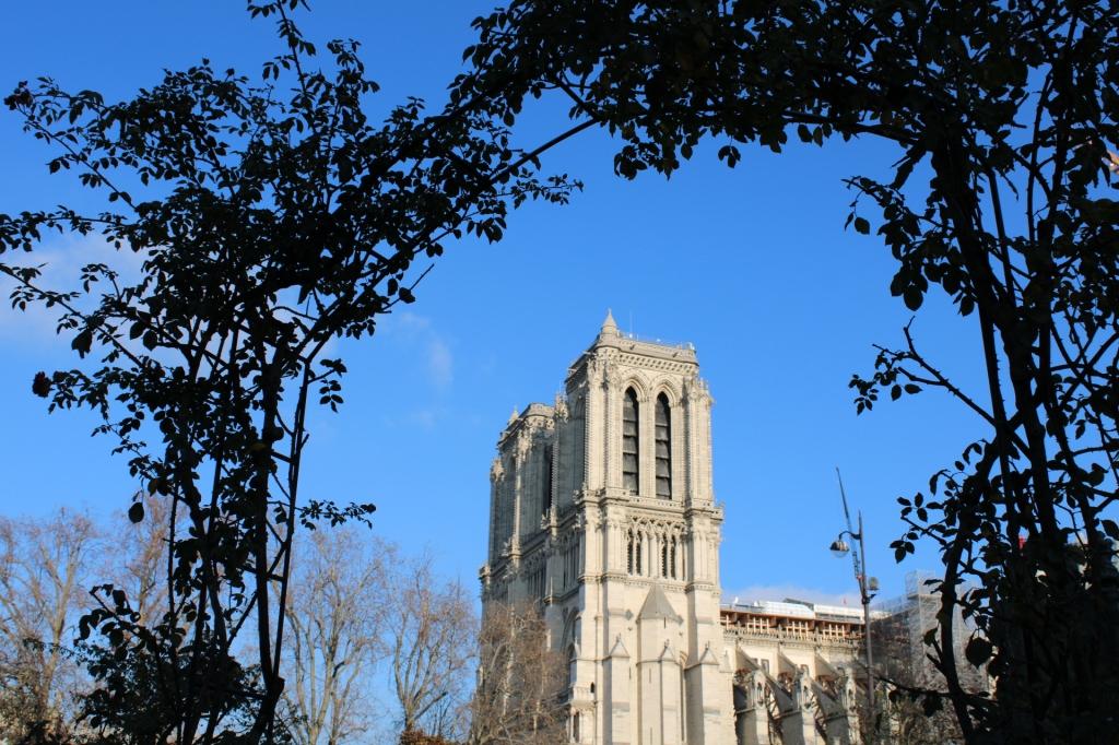 Vue sur Notre-Dame-de-Paris depuis le square Viviani